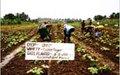 Harvesting The Fruits of Knowledege in Rural Sierra Leone